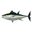 tuna fish mockup realistic style vector image