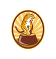 Angry tiger sitting on top of plinth vector image vector image