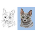 portrait cute russian blue cat vector image