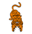 tiger 0016 vector image vector image