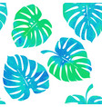 tropical leaves monstera on a white background vector image