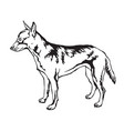 decorative standing portrait of belgian shepherd vector image vector image