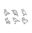 set birds in linear style pigeon vector image
