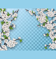 set spring blooming fruit tree branches vector image