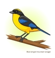 Blue winged mountain tanager bird vector image vector image