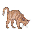 Drawing of threaten cat vector image vector image