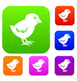 chick set color collection vector image vector image