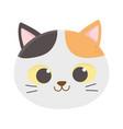 cute cat face feline cartoon animal icon vector image vector image