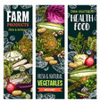 sketch banners of natural farm vegetables vector image vector image