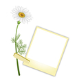 A Beautiful White Daisy with Blank Photos vector image vector image