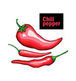 red chili pepper hand drawn vector image