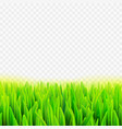 stock realistic macro grass vector image vector image