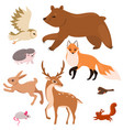 collection forest animals isolated on a white vector image