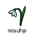 flower of snowdrop vector image vector image