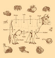 meat hand drawn scheme vector image vector image