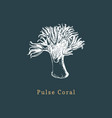 pulse coral drawing of sea vector image vector image