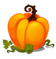 ripe pumpkin isolated on white background sketch vector image vector image