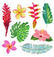 Palm leaves monstera and exotic flowers set