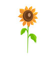 sunflower isolated white background decor element vector image vector image