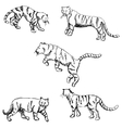 Tigers A sketch by hand Pencil drawing vector image vector image