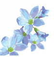 Beautiful Watercolor Blue flowers vector image