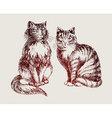 cats sketch vector image vector image