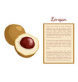 longan exotic juicy fruit plant poster frame text vector image
