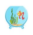 round glass aquarium with golden fish different vector image