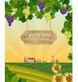 autumn festival wood sign wine grapes and vector image vector image