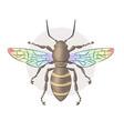 bee honeybee hand drawn vector image