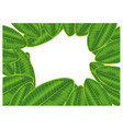 frame green plumeria leaf isolated on white vector image vector image