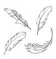 line art feathers set vector image