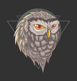 owl bird wisdom vector image vector image