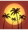 palms and sunset vector image