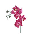 with pink orchids digital vector image vector image