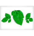 Green leaves with waterdrops vector image
