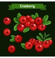 colorful branch of Cranberry 02 vector image vector image