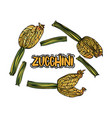 set with zucchini vector image