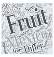 What are some Fruits in Mexico Word Cloud Concept vector image vector image