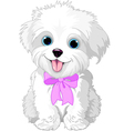 White lap-dog vector image vector image