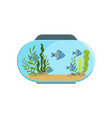 aquarium in round shape with blue exotic fishes vector image vector image