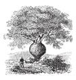 bottle tree vintage engraving vector image vector image