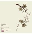 Decoration grape vine vector image