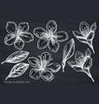 set hand drawn chalk plum flowers vector image