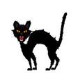 halloween growl black cat vector image vector image