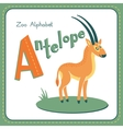 Letter A - Antelope vector image vector image