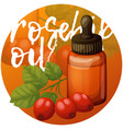 rosehip oil and berries essential vector image