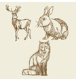 animals hand drawing collection vintage vector image