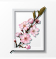 branch of pink sakura cherry flowers in frame vector image