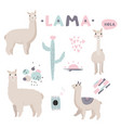 lama collection with cute vector image